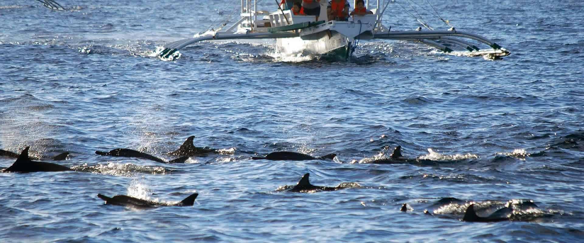 dolphins bohol